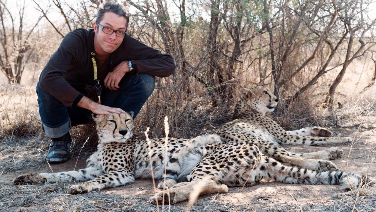 Tim stroking purring cheetahs, Botswana