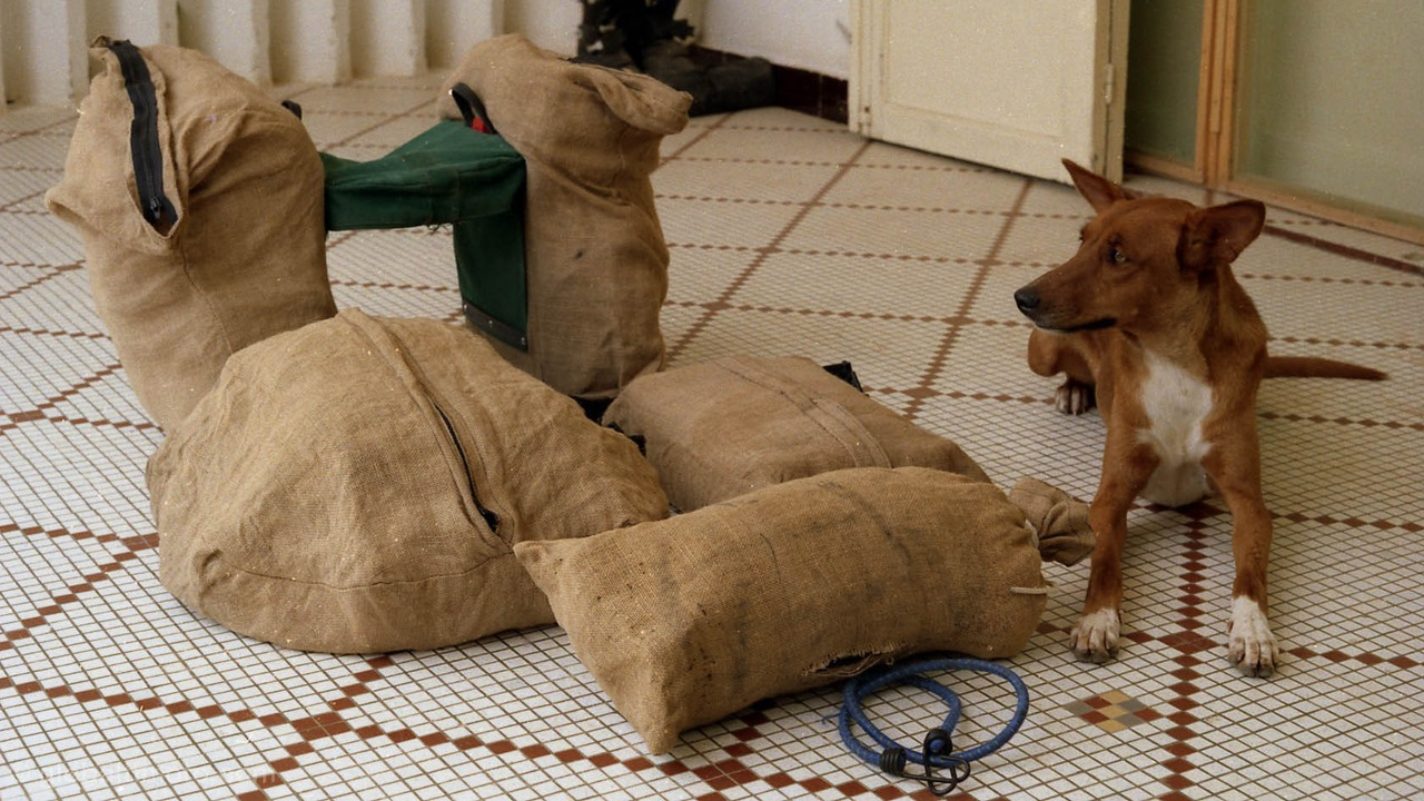 Kaédi guarding sack cloth covered luggage in Nouakchott